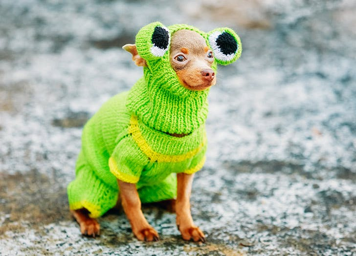 dog in frog costume