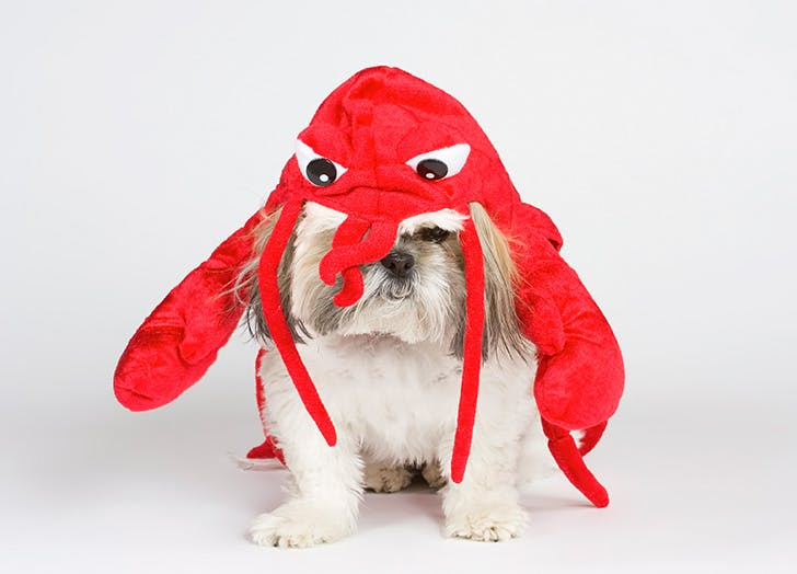 dog lobster costume