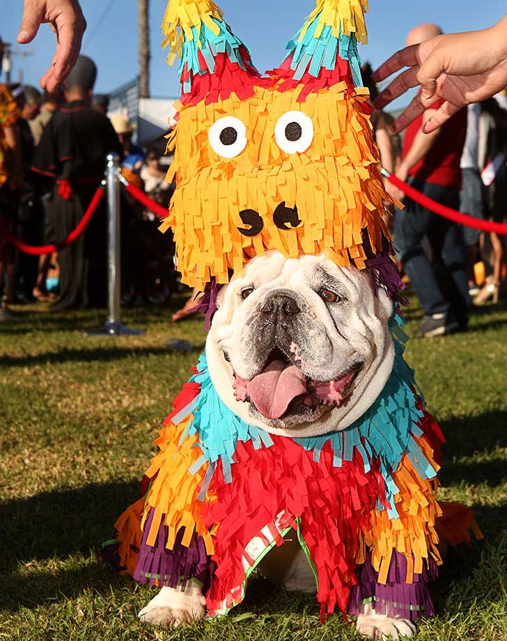 dog pinata costume