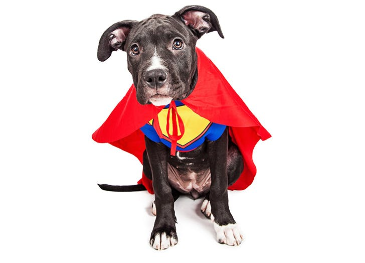 dog superhero costume