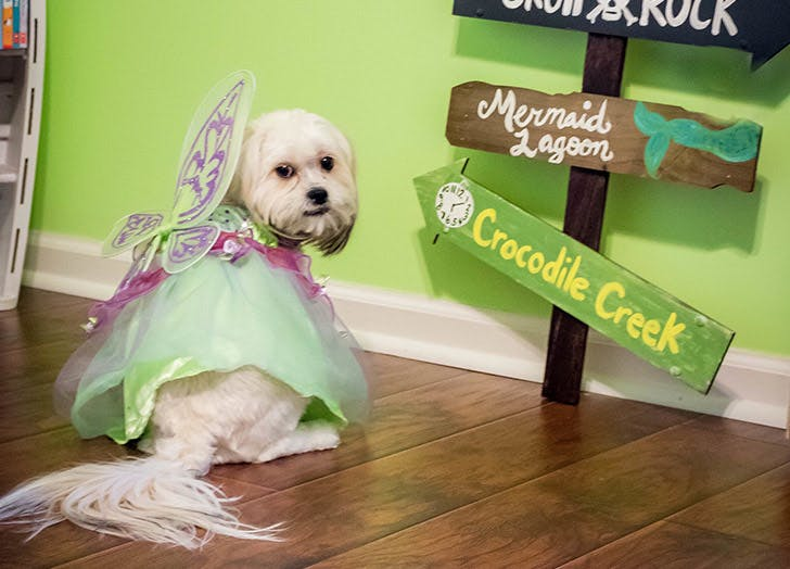 dog tinkerbell costume