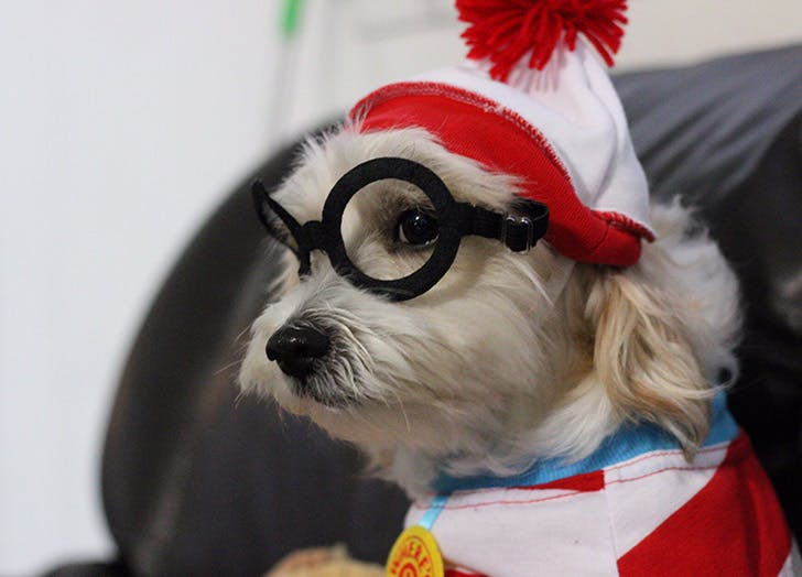 dog waldo costume
