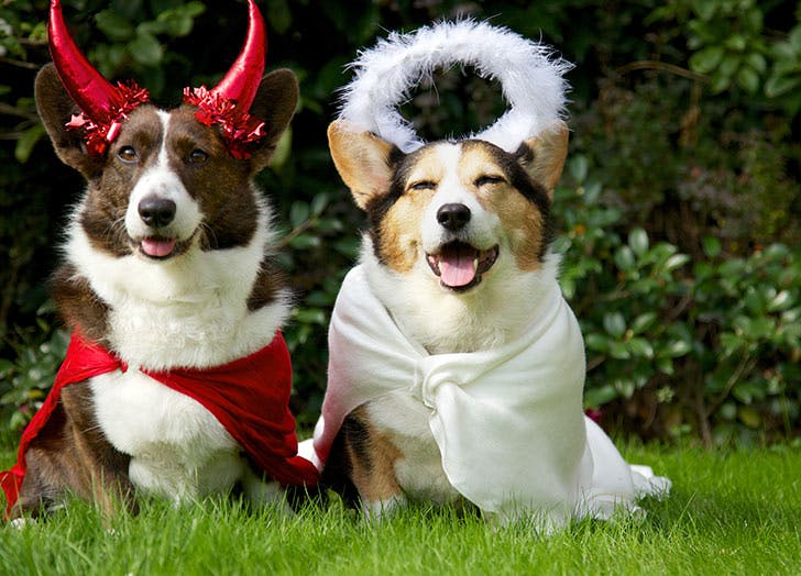 dogs devil angel costume