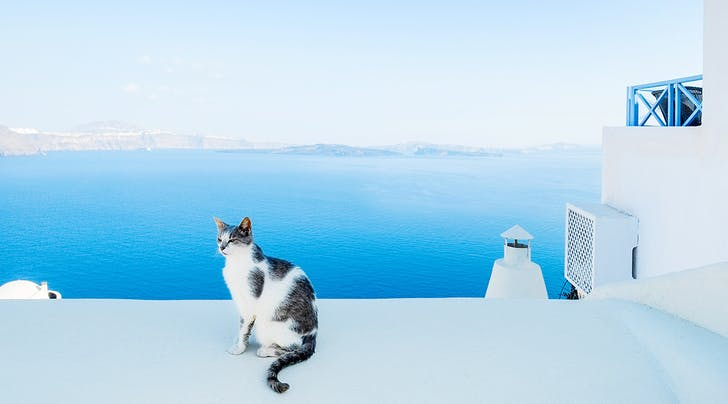 This Is Not a Drill: You Can Get Paid to Live on a Beautiful Greek Island with 55 Cats