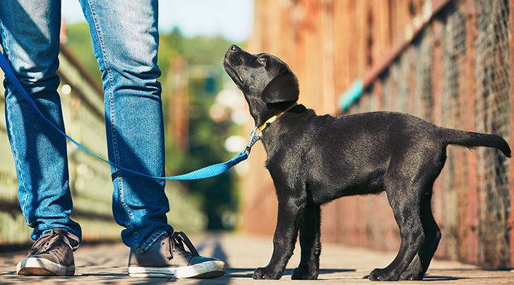 The 3 Best Tips to Stop Your Dog from Barking
