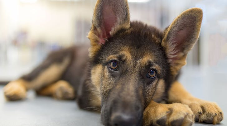 Here's How to Adopt the Dogs That Were 'Too Nice' for the TSA