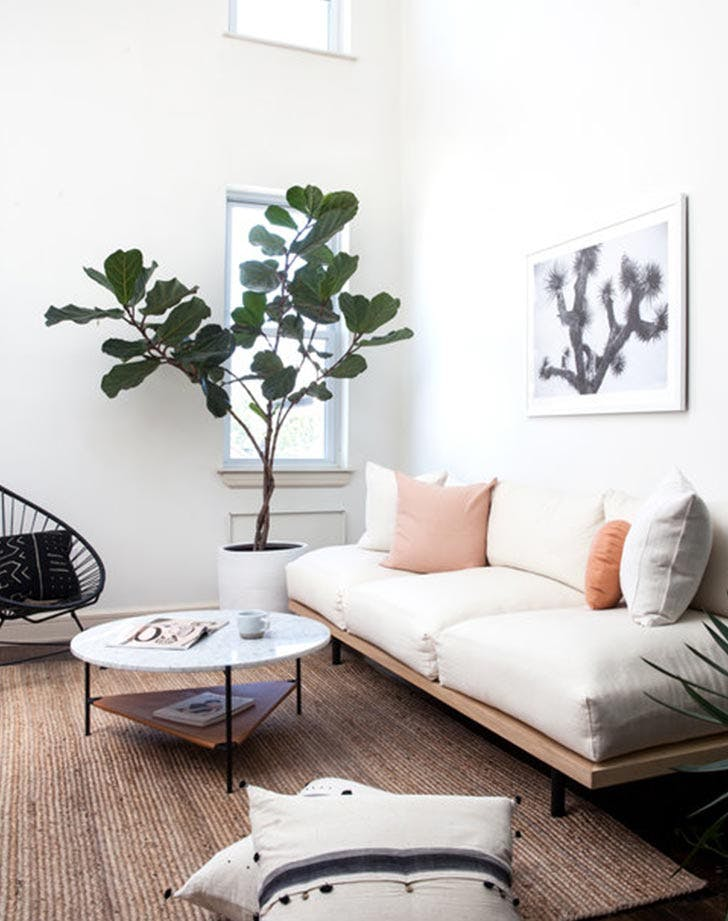 pink living room plant
