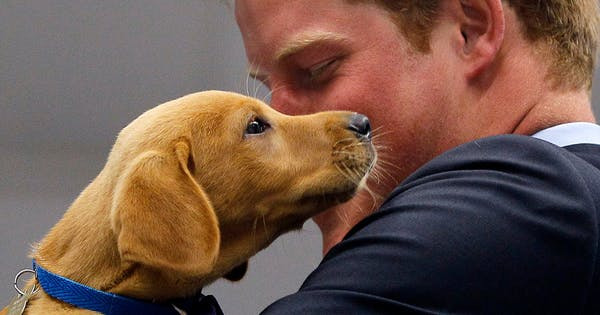 Royal Puppy Alert: Meghan Markle and Prince Harry Adopted a Dog
