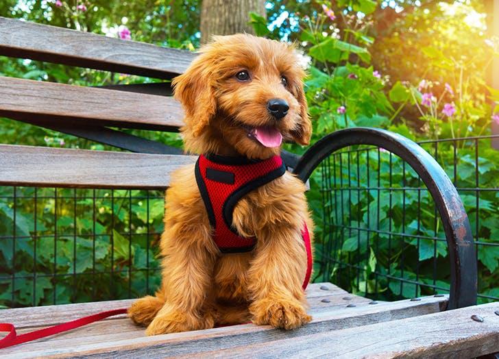 puppy sitting on bench