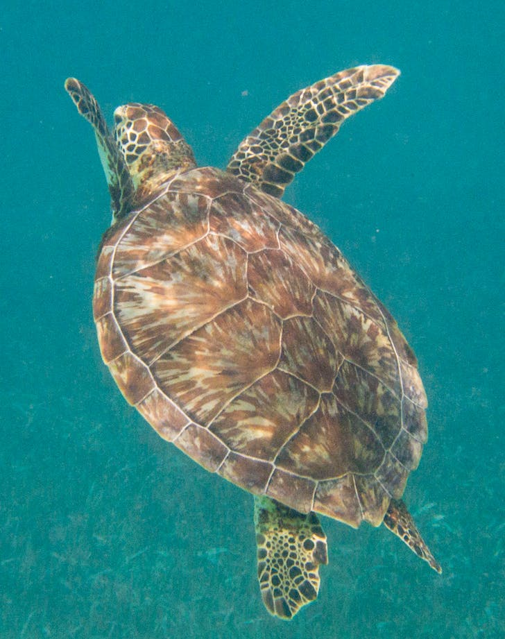 snorkeling at Hol Chan Marine Reserve in Belize