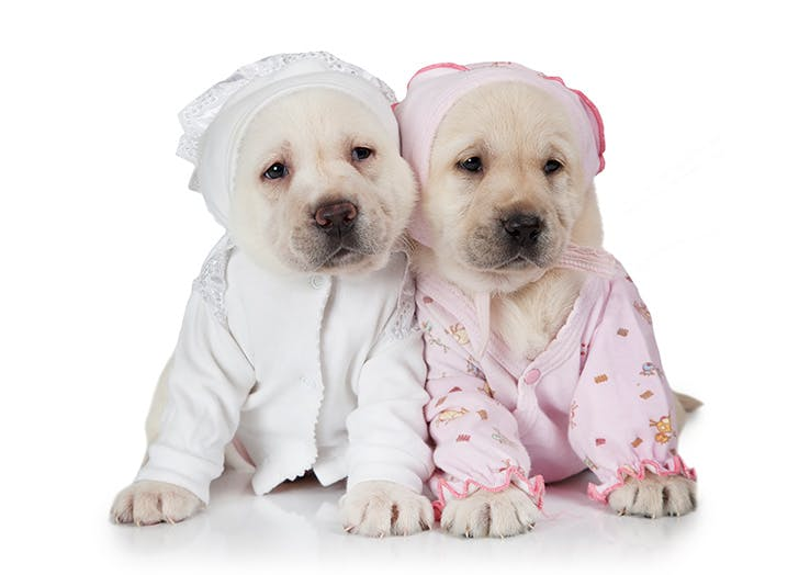 two puppies in pajamas