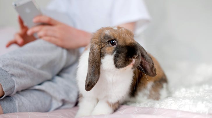 *This* State Just Became the First to Outlaw Beauty Products Tested on Animals