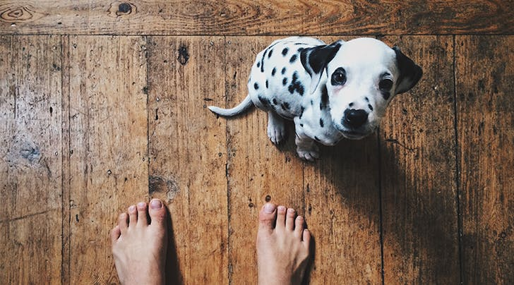 5 Puppy Training Mistakes You Might Not Realize Youre Making