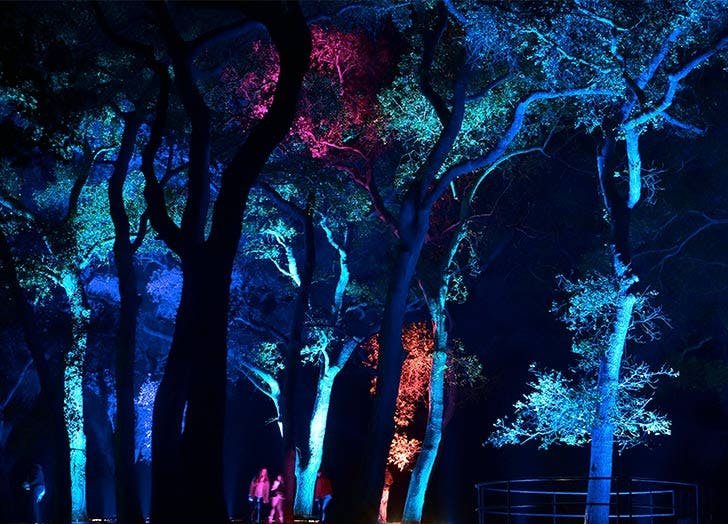 descanso gardens forest of lights