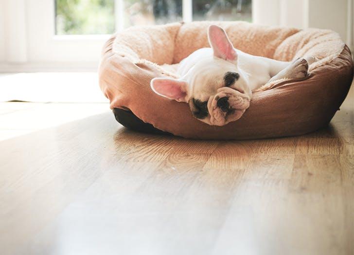dog sleeping in bed