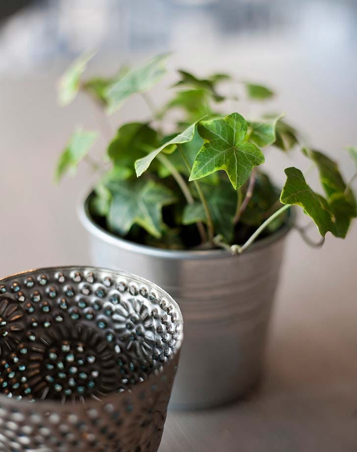 These 10 Houseplants Are Also Powerful Air Purifiers