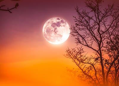 harvest moon 400