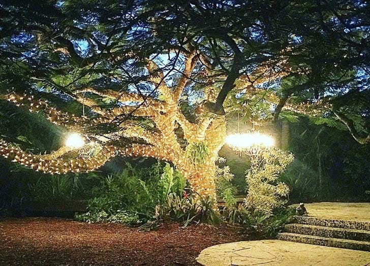 patch of heaven sanctuary lights tree