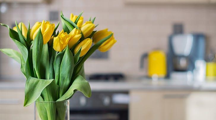 3 Tricks for Long-Lasting Tulips