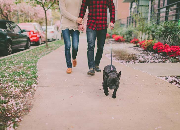 Couple walking their dog outside