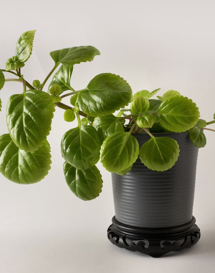 25 Cat Friendly Plants For Your Home Purewow