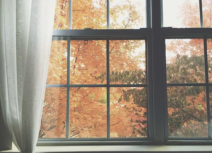 Window view to fall foliage