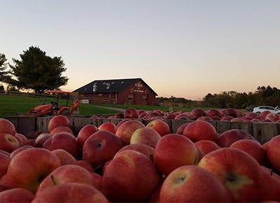 The Best Places To Go Apple Picking Near Nyc Purewow