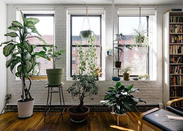 clean air plants apartment
