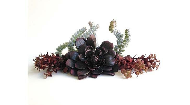 goth succulent trend 31