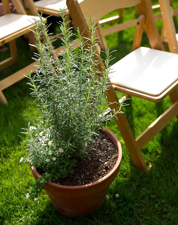 potted wedding plant 1