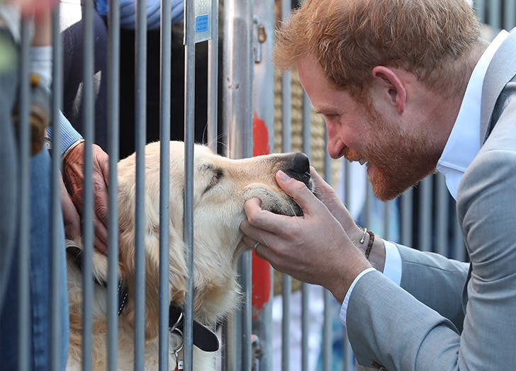 prince harry petting a dog