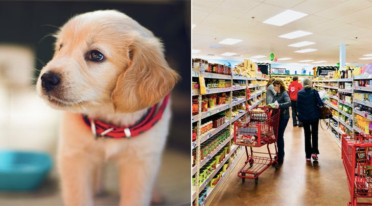 *Important*: Trader Joe's Launches Doggie Advent Calendars for Christmas 2018