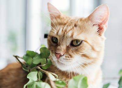 what plants are safe for cats 400