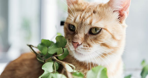 A Complete List Of Cat Friendly Plants Purewow