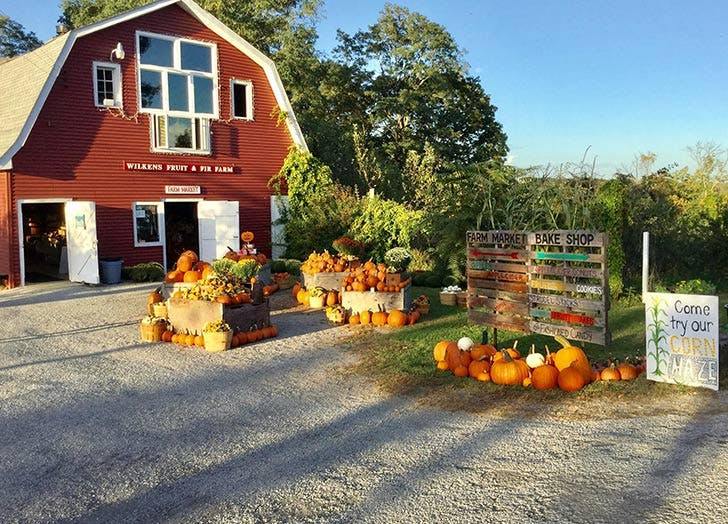 wilkens farm apples pumpkins