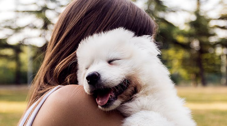 Dream Job Alert: You Could Earn $100/Hour to Play with Puppies