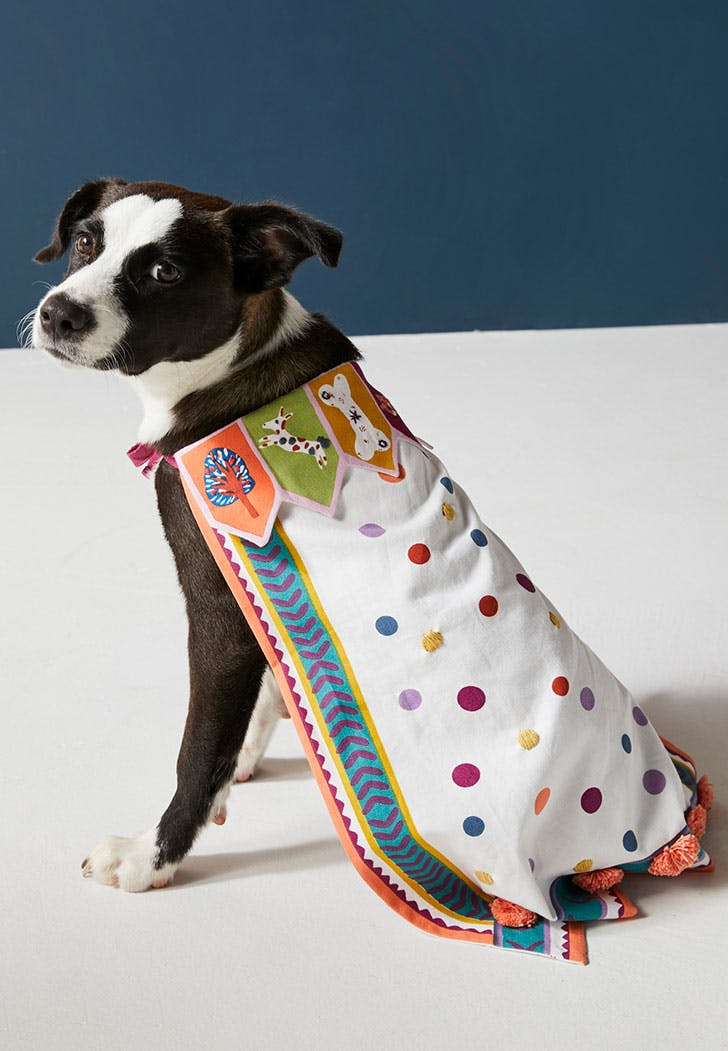 anthropologie dog cape