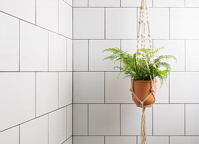 The 10 Best Plants For Bathrooms Purewow