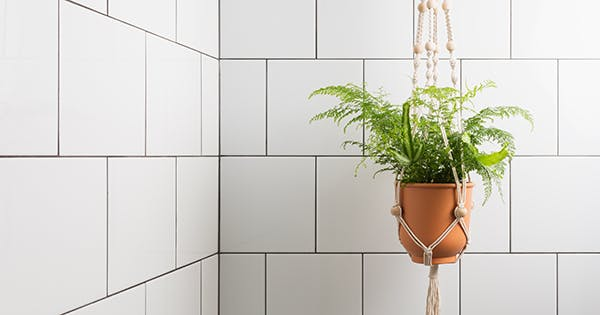 The 10 Best Houseplants for Your Bathroom