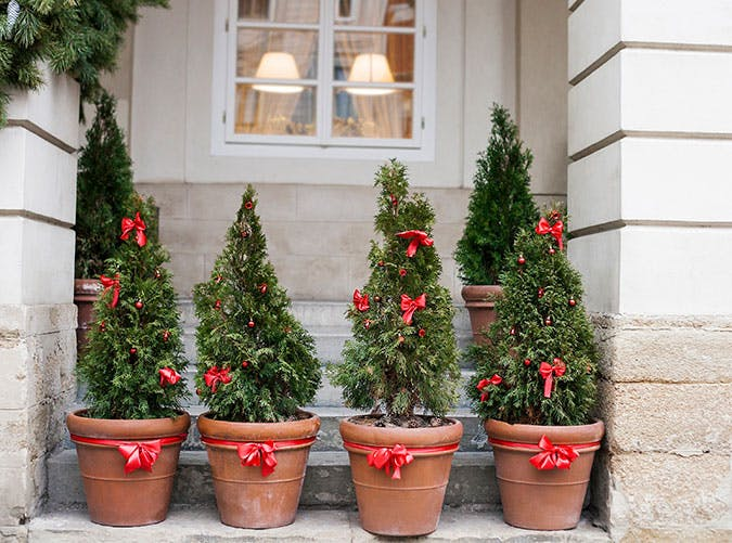 holiday decorations red bowed plants
