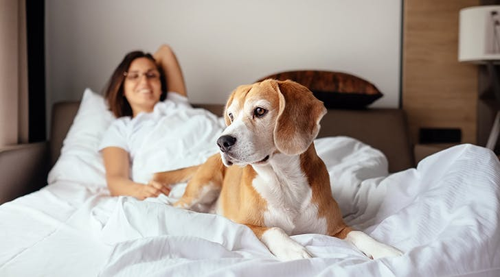 Our New Favorite Study Confirms That Women Sleep More Soundly Next to Dogs Than Other Humans