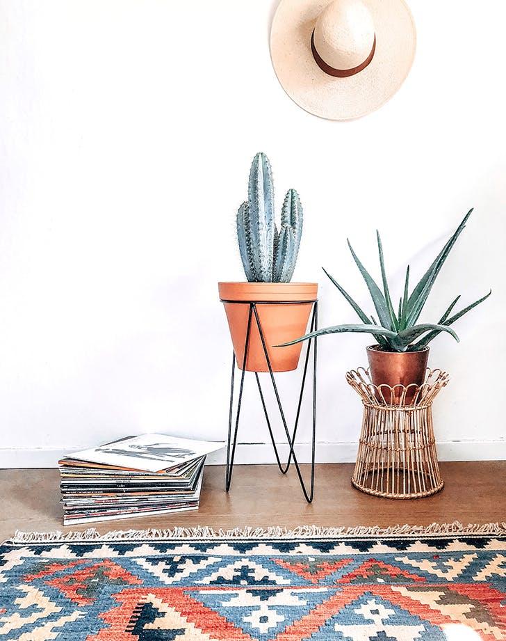 cactus trend