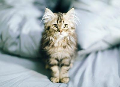cat chirping faq 400