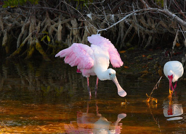 darling national wildlife refuge florida