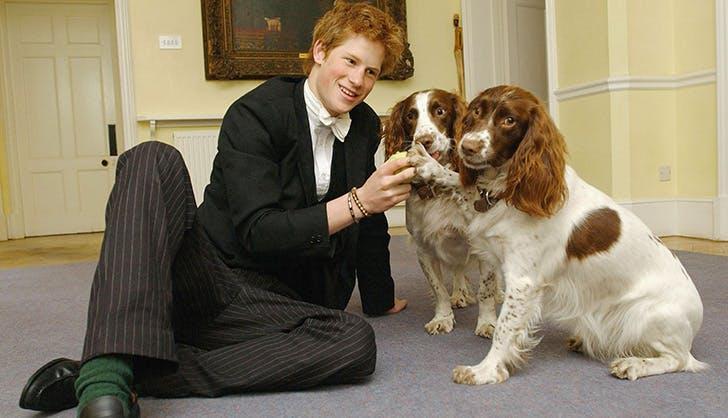 prince harry buckingham palace dogs