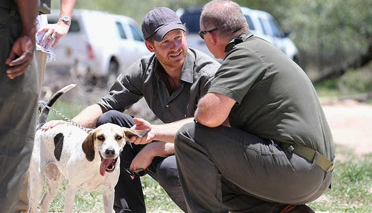 prince harry petting dog