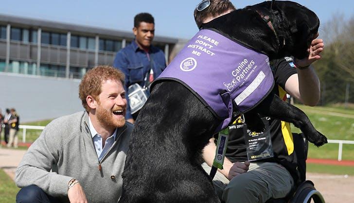 prince harry service dog