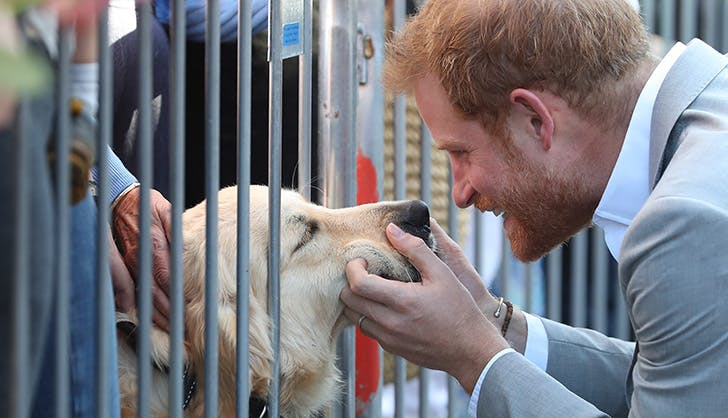 prince harry with sussex dog
