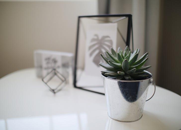 succulent and tchotchkes