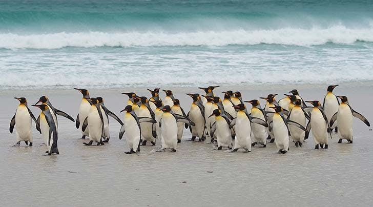 Want to Buy an Island Full of Penguins? Just Name Your Price
